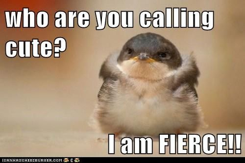 Hilarious Animal Pictures with Captions | funny-animal-captions-animal-capshunz-work-it-chickadee