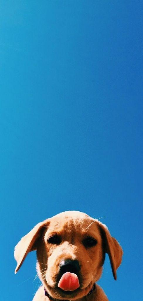 Hdwallpaper Lockscreen Wallpaper Iphone Android Dogwallpaper Cute Dog Wallpaper Dog Background Dog Wallpaper Iphone