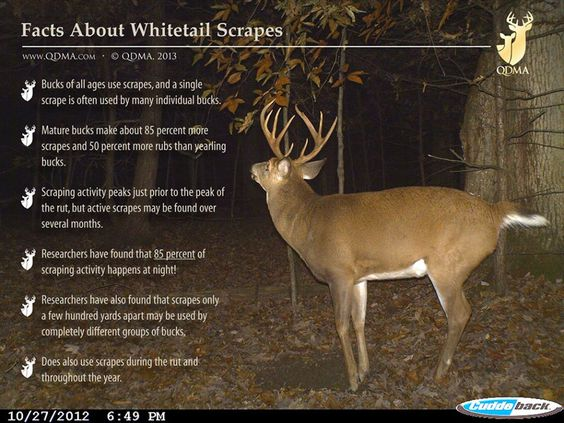 Facts About Whitetail Scrapes- http://www.waldenfarmandranch.com/ now has Texas Hunter Products at our Mineral Wells store! Come visit us for all your hunting needs!