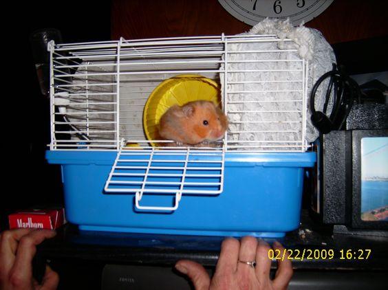 hidey hamster