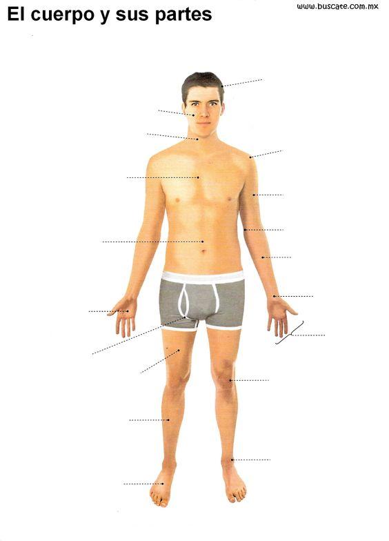 Esquemas del cuerpo humano a color sin el nombre de sus for Medidas ergonomicas del cuerpo humano