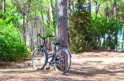 Bicycle near a tree in summer forest Royalty Free Stock Photo