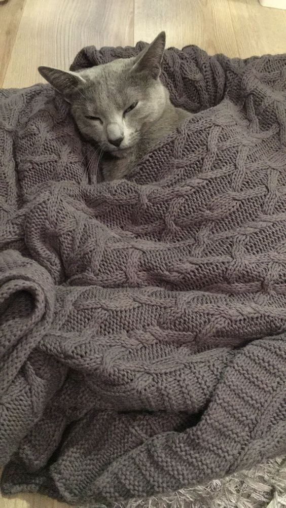 Cute gray kitty all tucked in.