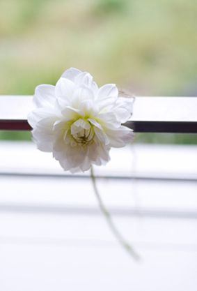 A simple perfect bloom tied on with twine can be just as stunning as an arrangement.