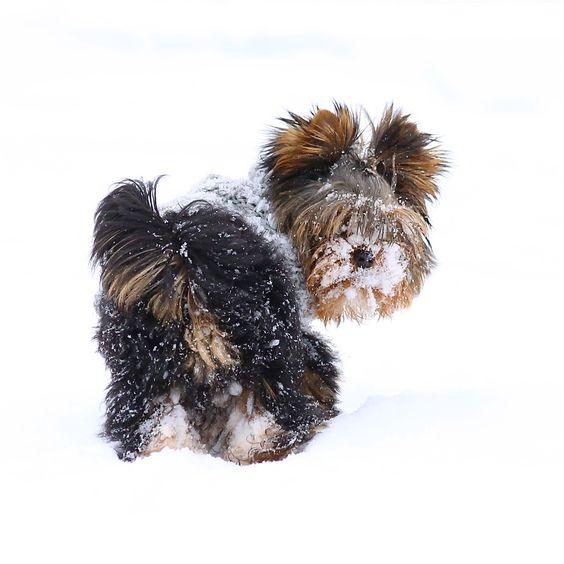 Snowy little fellow by Päivi Vikström on 500px