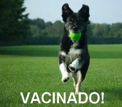 VACINANDO CÃES FILHOTES! O reforço anual de todas as vacinas é imprescindível! SERÁ? BLOG Vet Mania - Paloma Zettermann http://vet-mania.blogspot.com.br/2015/10/vacinando-caes-filhotes.html #blogvetmania #blogvetmaniavacinandocaesfilhotes #blovetmaniavacina #blovetmaniafilhotes #blovetmaniacaes #blovetmaniacachorro #blovetmaniasaude #vacinandocaesfilhotes #vacinacaes #saudedosfilhotes #dicasparaseucao #dicasparaseucachorro #dençasemcaes #palomazettermann