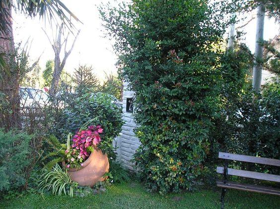 Tinaja en jardin c ntaros y tinajas pinterest for Tinajas de barro para jardin