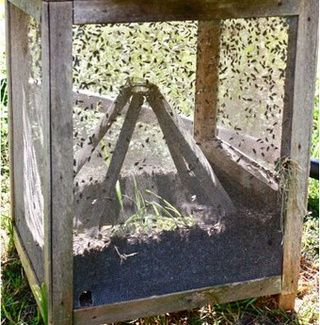 Build the Cadillac of Fly Traps for a Fly-Free Summer  #goatvet says if getting this many flies- a good clean up of old bedding etc may be needed as well