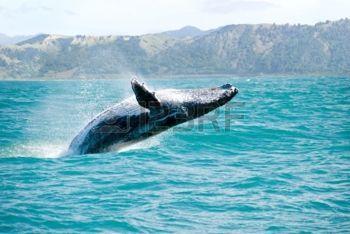 "JoanMira - 1 - World : Roberto Carlos - ""As baleias"" - Video - Musica"