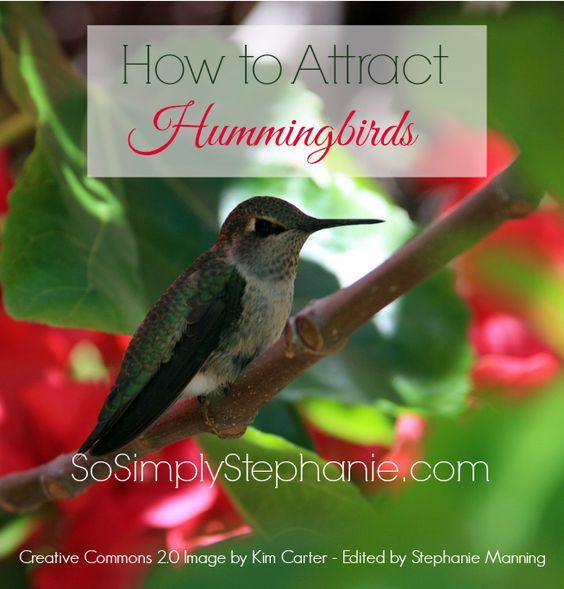 The+Perfect+Hummingbird+Food+Recipe