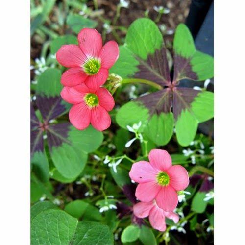 Canto do Feng Shui: Plantas da Sorte para sua Casa
