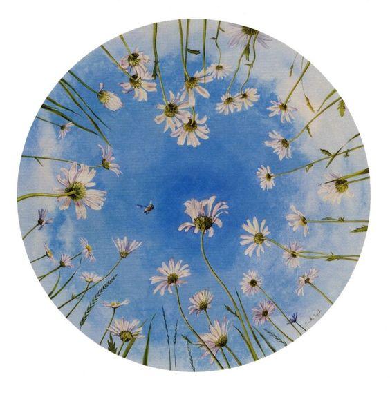 Oxeye Daisies ~ Samantha Symonds