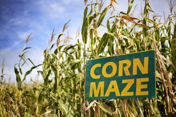 Get Lost in These Amazing New England Corn Mazes