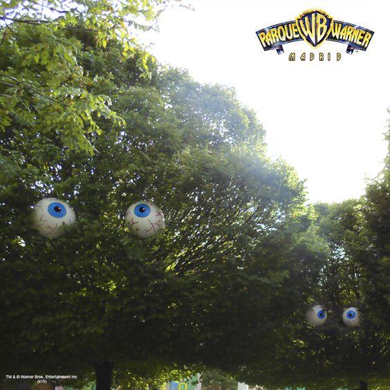 Nuestros árboles os están espiando. Da la voz de alerta y dinos en qué zona se encuentran estos árboles fisgones. ¡Mucho cuidado!