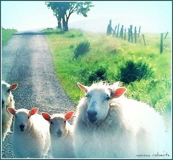 Irish roadblock ... taken through the windshield.
