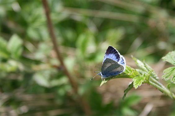 mariposa-en-el-moncayo-600x400