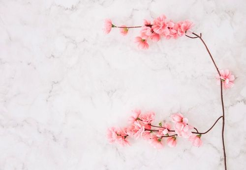 Download Pink Cherry Blossom Over The Marble Textured Background For Free Cherry Blossom Background Cherry Blossom Floral Watercolor