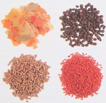 various types fish feed