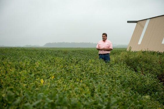 Tinh chất mầm đậu nành cần đảm bảo có nguồn gốc tốt