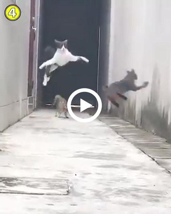 A fuga espetacular de um gato