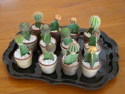 cactus na mesa