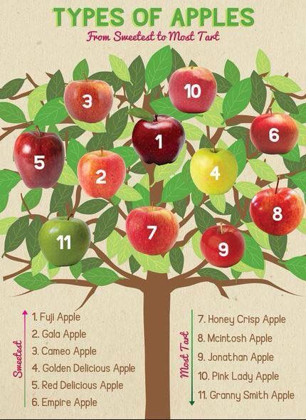types of apples chart gluten free dairy free food
