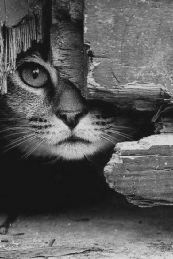 Une photographie noir et blanc de chat sympa: