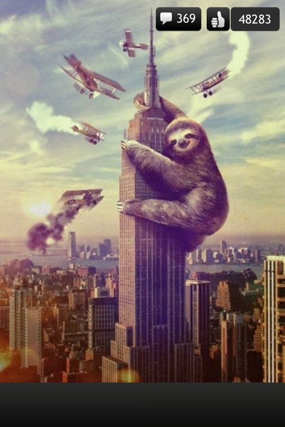 Slothzilla! Like or follow if u smiled or laughed!