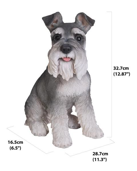Grey Schnauzer Miniature Schnauzer Schnauzer Schnauzer Dogs