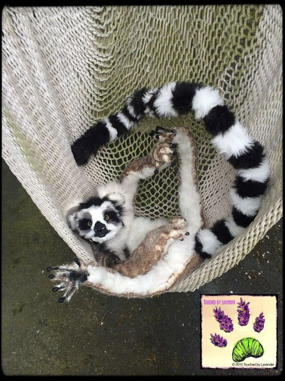 handmade poseable animal recycled artist touchedbylavender Touched by Lavender artist artician craft crafts stuffed animal plush plushie ringtailed lemur Deviant art: http://touchedbylavender.deviantart.com/ Facebook: https://www.facebook.com/touchedbylavender?ref=hl