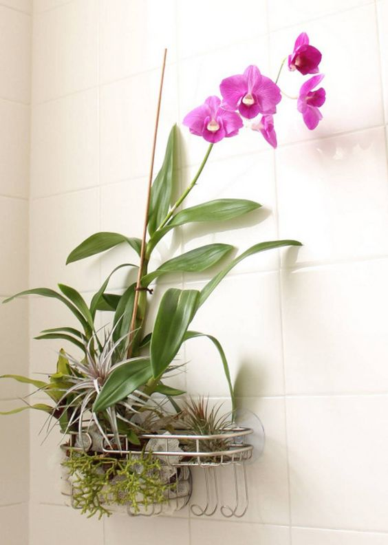 Learn how to transform an old shower caddy into a clever shower garden | Dallas Morning News