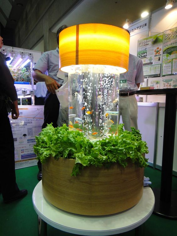 Indoor Aquaponics   Gardening   Pinterest   Why not, The plant and Twists