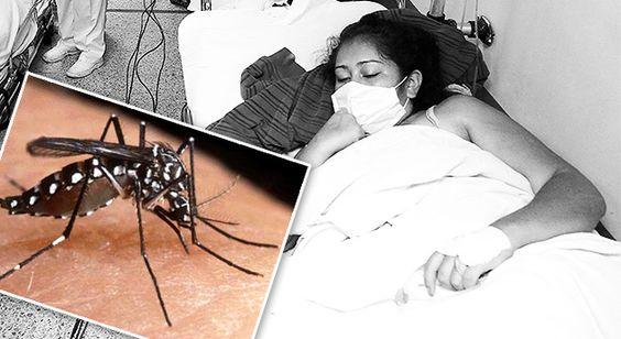 VISIÓN FUTURA JUVENTUD TRANSFORMADORA SIN DISTINGO SOCIAL.: Panamá, en alerta por el virus chikungunya