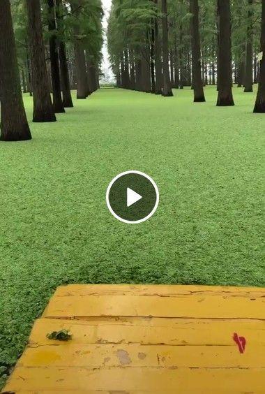 Parque de grama aquática