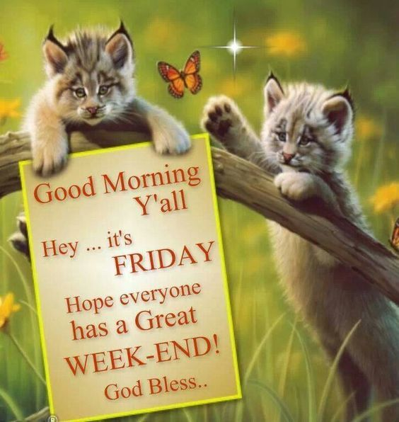 Its Friday Great Weekend Morning Quote Its Friday Quotes Good Morning Friday Friday Quotes Funny