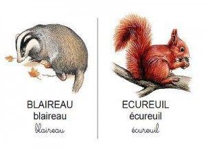 Vocabulaire les animaux de la forêt