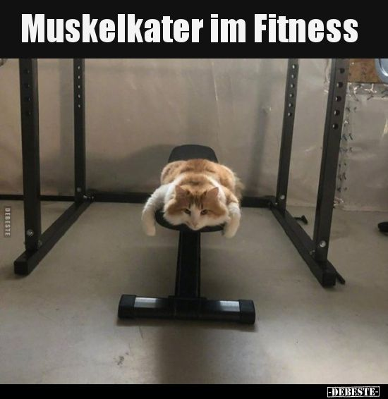 Muskelkater Im Fitness Lustige Bilder Spruche Witze Echt Lustig Katzen Lustige Spruche Katzen Witze Kater