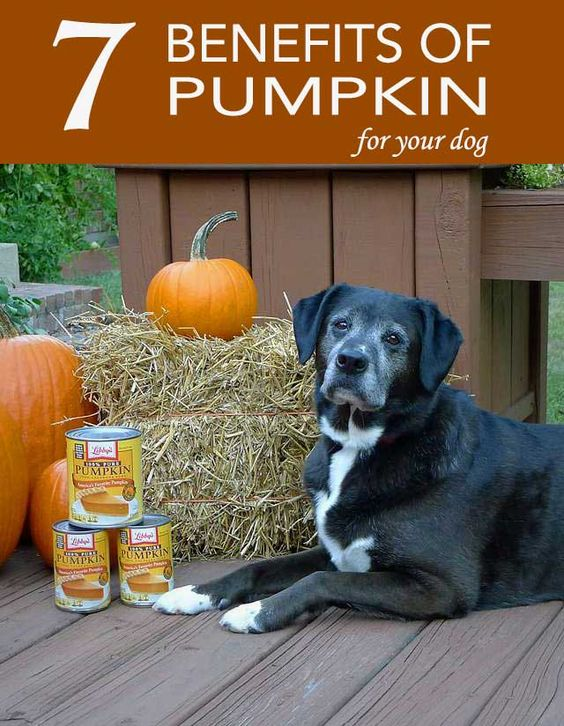 Can Cats Eat Pumpkin - petcentral.chewy.com