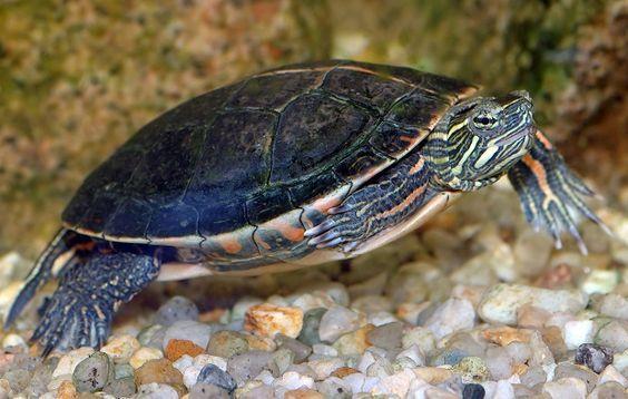 El hábitat de las tortugas