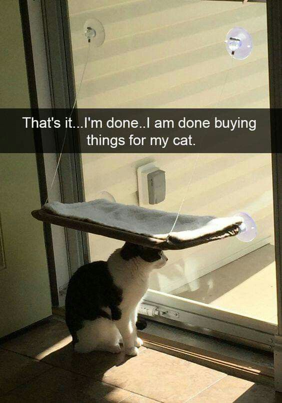Pin By Journalu Journals On Cats And Quotes Cat Memes Clean Cat Memes Funny Cat Fails