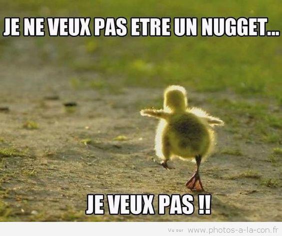 Image Drole Poussin Dr Les Funny