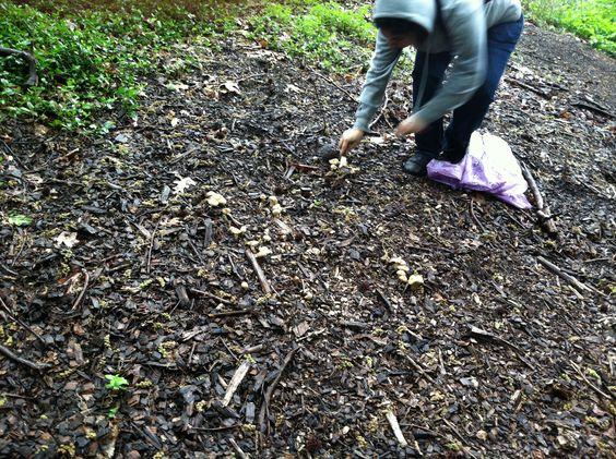 Soil amendments defined soil pinterest for Soil amendments