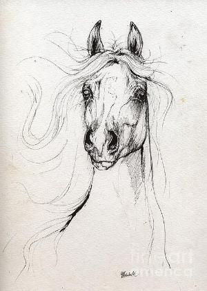 Horse drawing by lesley