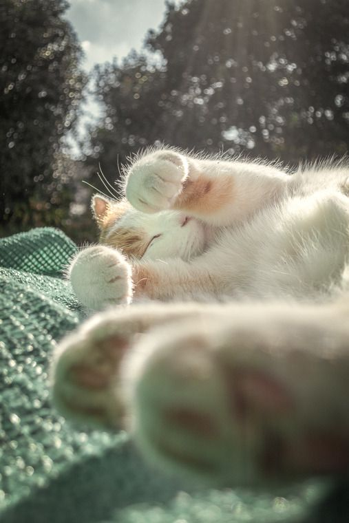 Snuggly Kitty Cute Cats Photos Cute Cats Cats