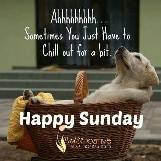 Happy Sunday | Happy sunday quotes, Sunday humor, Sunday quotes funny