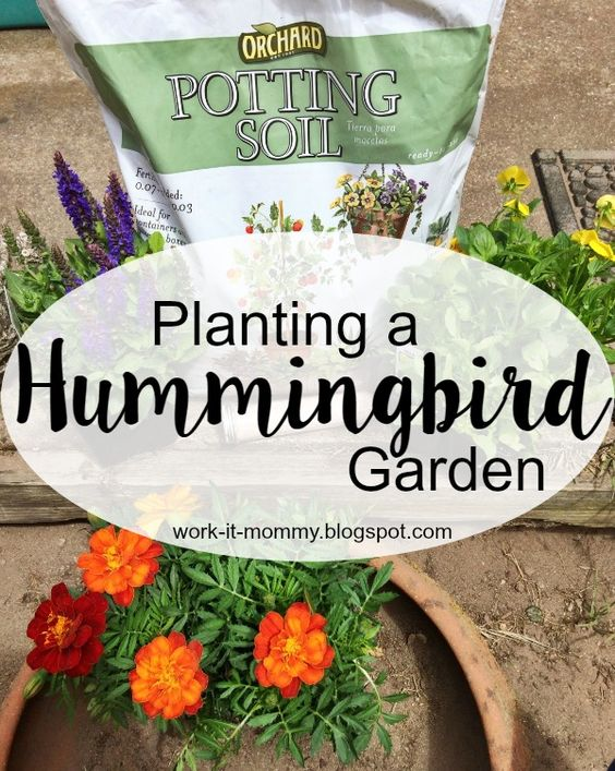 Gardens Hummingbird garden and Hummingbirds on Pinterest