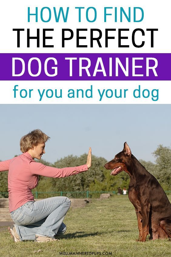 How To Find The Right Dog Trainer The Perfect Dog Best Dog
