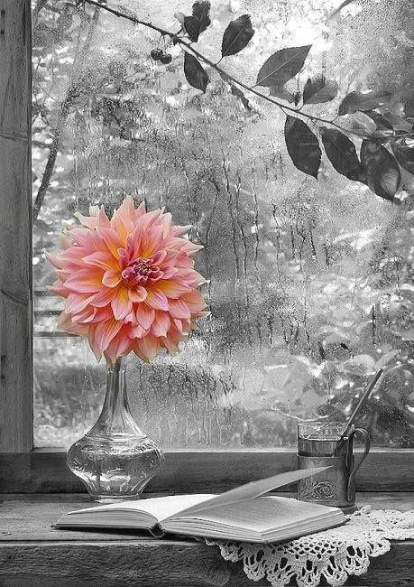 Fleur de couleur avec le décor en arrière tout noir et blanc!