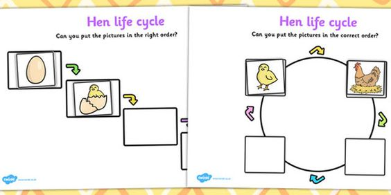 Hen Life Cycle Worksheets Hen Egg Chick Hatch Life