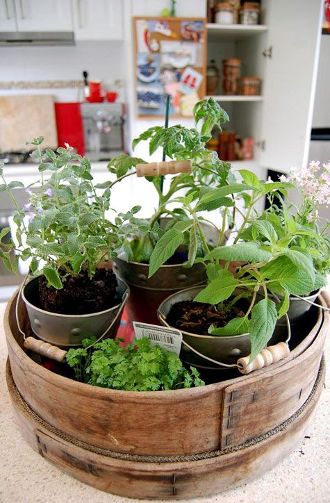 Herbs In Containers So Cute Herbs Pinterest Gardens